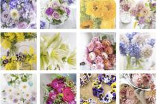 DL-Flower images のページの写真を更新しました。