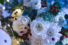 【 Flower Photo in November 】Christmas Color