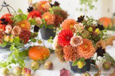 【 Flower Photo in September 】Autumn Orange