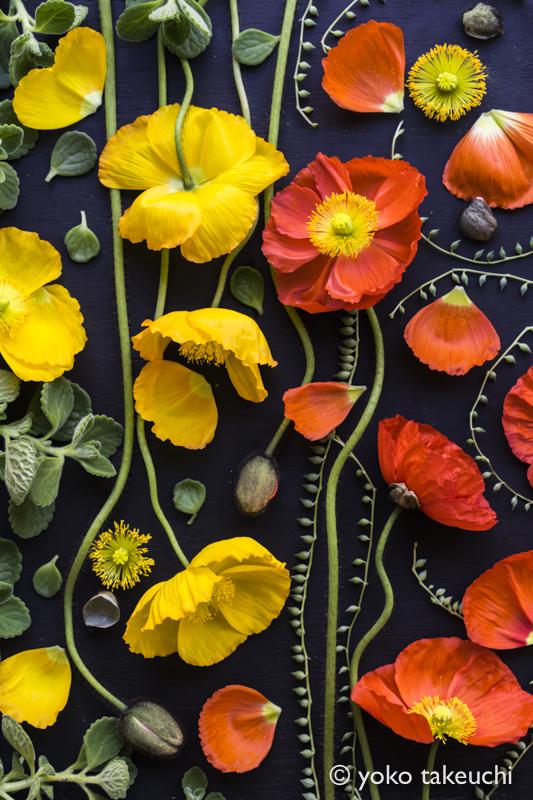 botanic-07949
