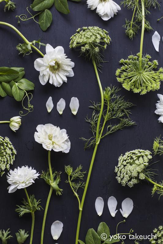 botanic-3743