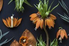 【 Gallery 】Botanic シリーズ に新作を2点追加しました。
