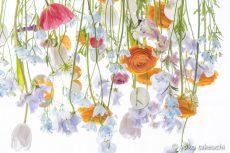 【 Gallery 】 Hanging Flowers シリーズを公開しました。