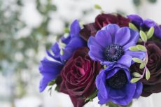 【 Flower Photo in January 】Red and Purple