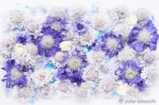【 Monthly Flower Collage 】 April