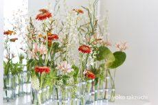 【 Flower Photo in July 】Alstroemeria