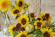 【 Flower Photo in August 】Van Gogh's Sunflower