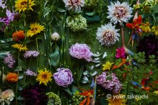 【 Monthly Flower Collage 】June  2019