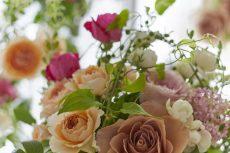 【 Flower Photo in June 】Roses