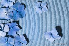 【 Gallery 】Zen Petals シリーズ を追加しました。