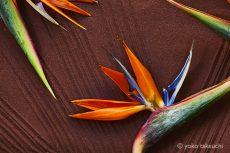 【 Gallery 】Zen Petals に新作を追加しました。