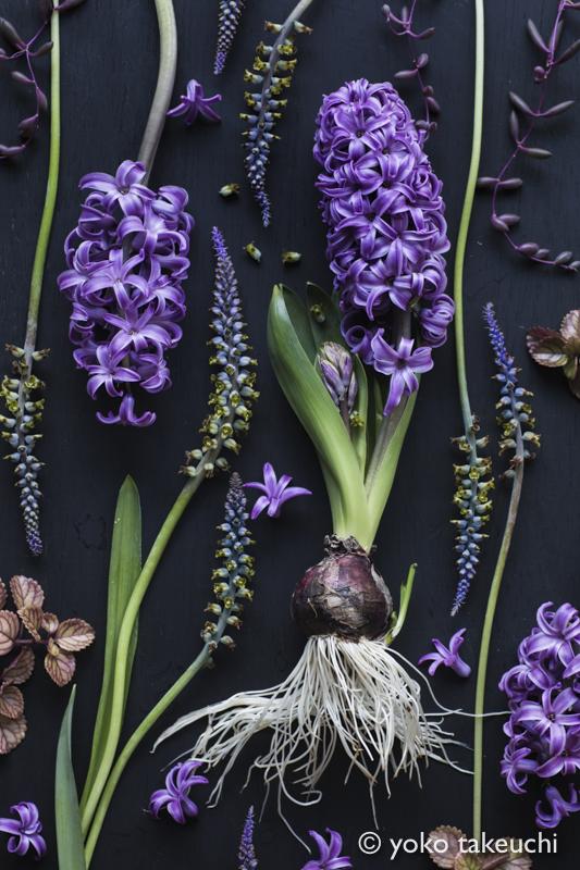 botanic-3734