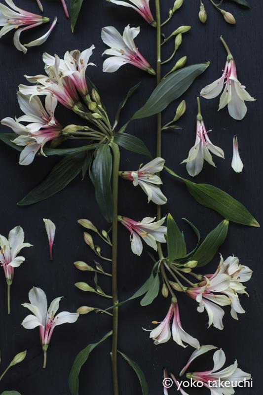 botanic-3796