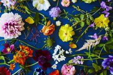 【 Gallery 】colorful garden series has been updated