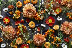 """""""Flower Collage"""" series has been updated"""