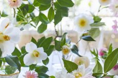【 Flower photo in March 2021】Camellia
