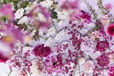 【 Monthly Flower Collage 】January  2020   本年もどうぞよろしくお願いいたします